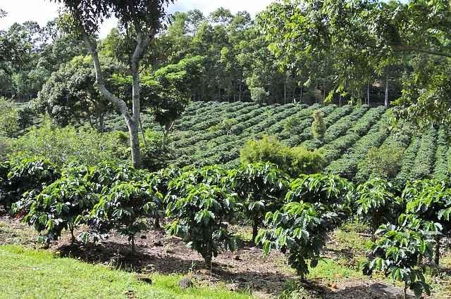 coffee-642773_640