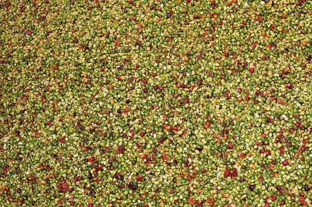 coffee-beans-940185_640